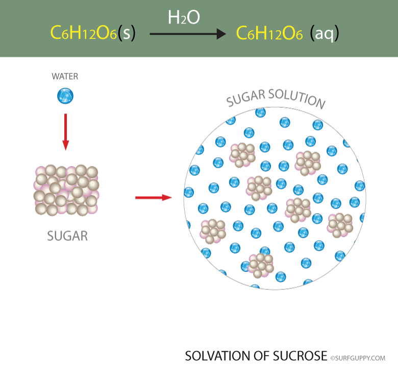 Sucrose dissolving in water results results in salvation