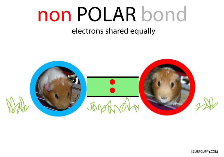 Polar Bond Examples