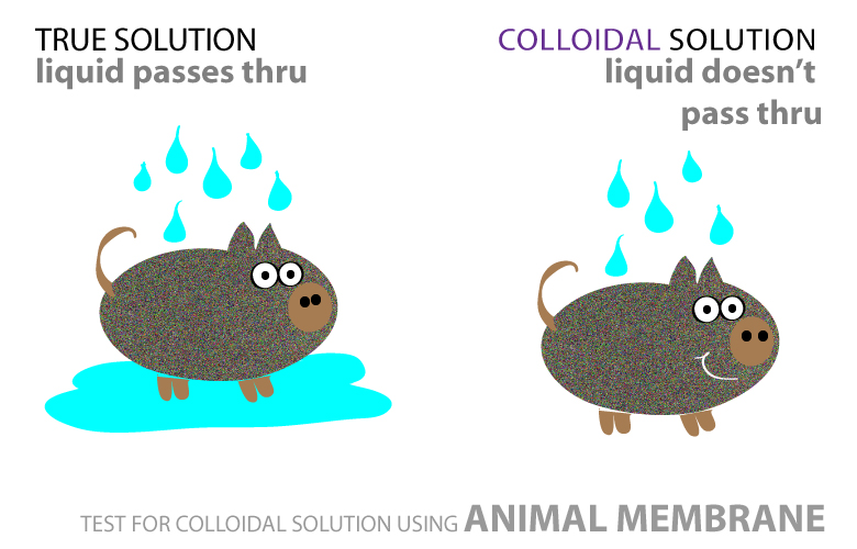Animal skin test for colloidal solution - cartoon chemistry