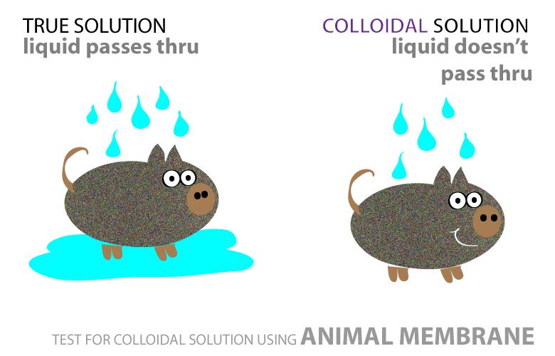 Properties Of Colloids - Surfguppy