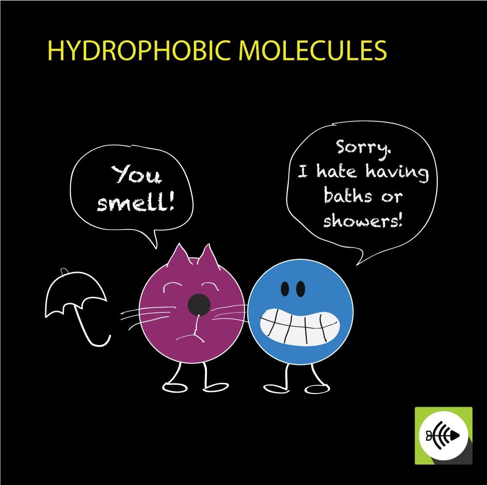 Hydrophobic molecules repel water