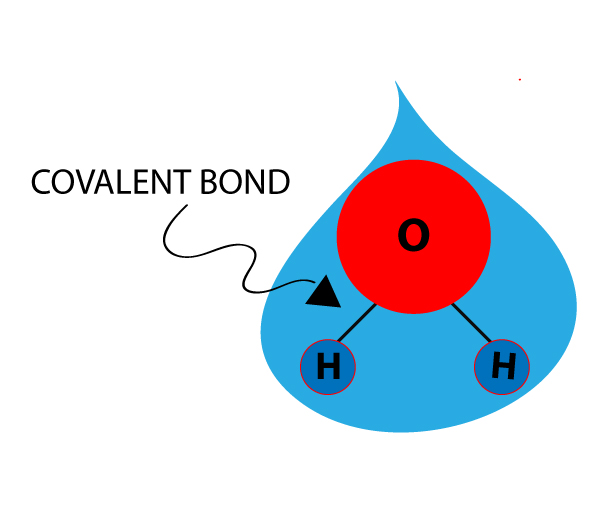 A water molecule with covalent bond
