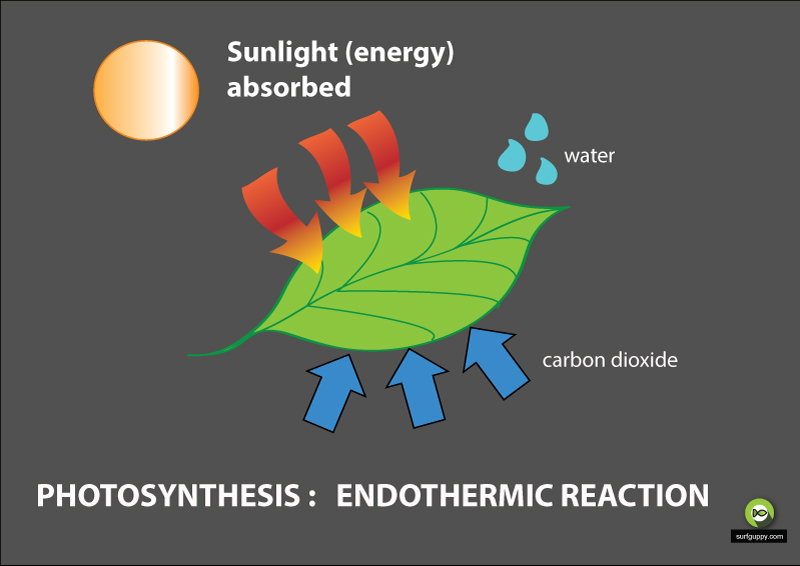 photosynthesis endothermic reaction