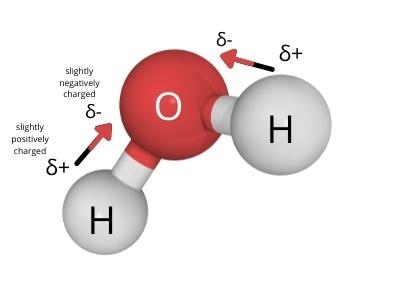 Why is water a polar molecule?