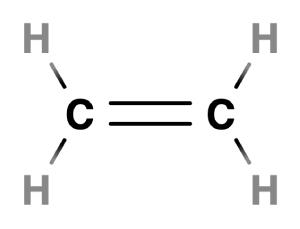 ethlyene - double bonds
